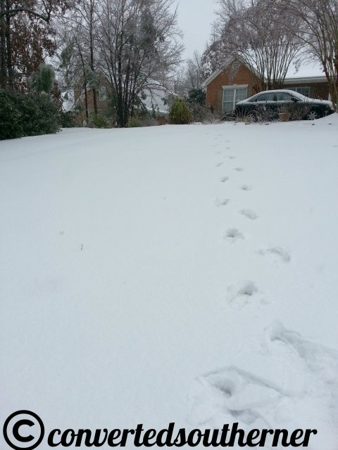 The front yard on a snowy day, look how deep my footprints are!