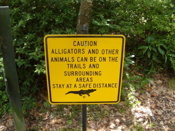 Watch Out for Gators... via Pinterest